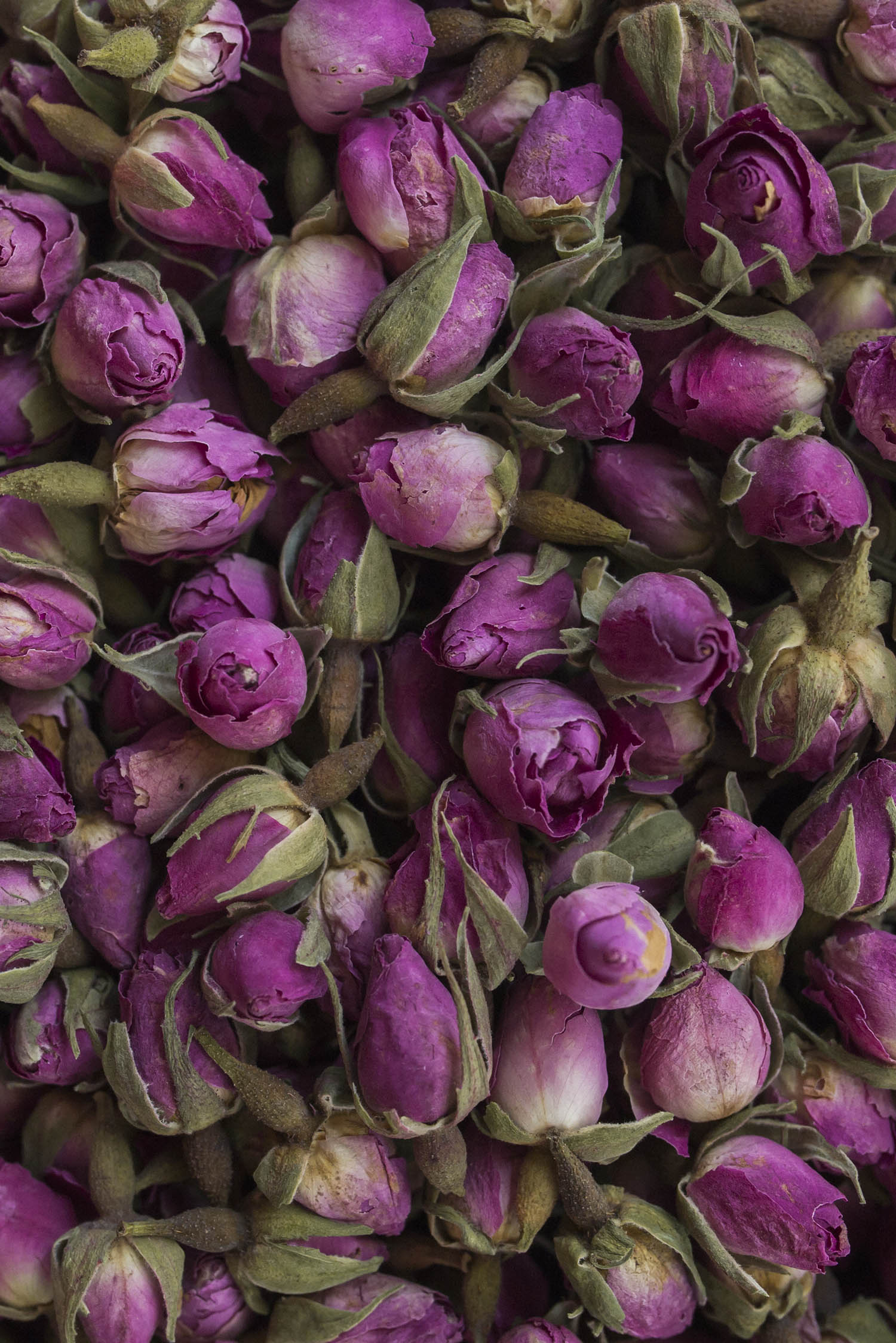 Persian pink rose buds